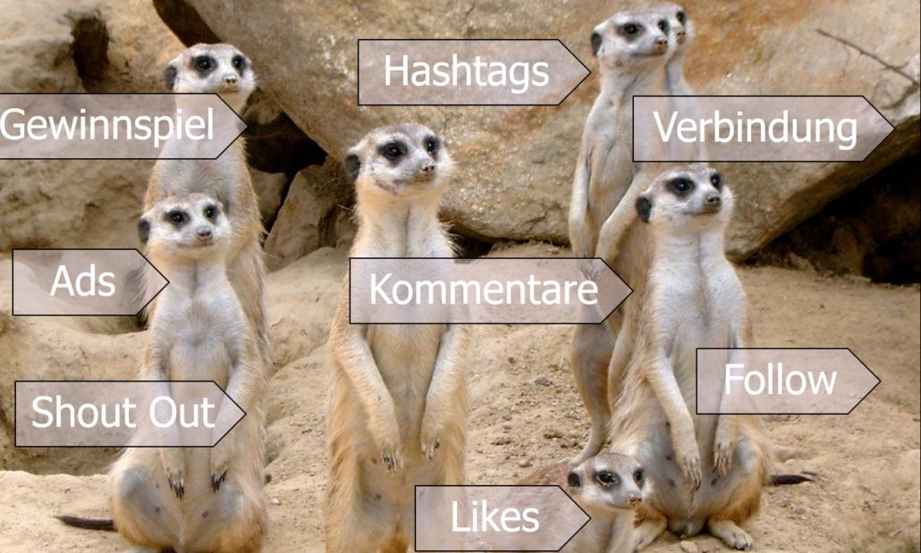 Instagram Marketing Follower